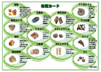 化石一覧表